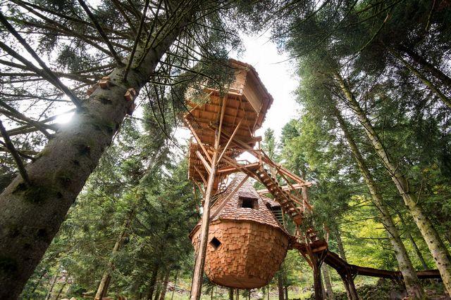 cabane-dans-arbres-9274