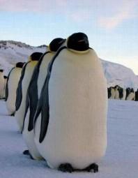 Antarctique C. Voirin (4)