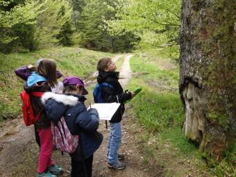 Enfants devant arbre