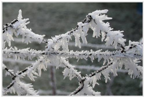 gel--e-blanche-sur-grillage