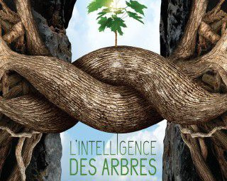 L_Intelligence_des_arbres