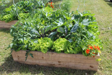permaculture bacs potagers
