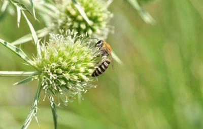 pollinizz2