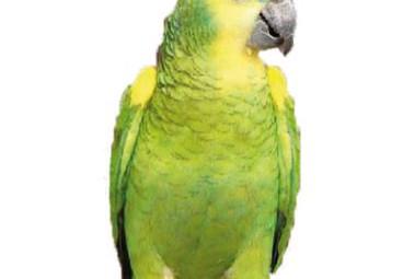 gamm-vert-photo-perroq
