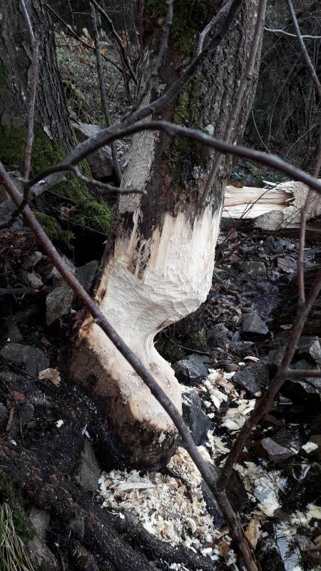 castor lac