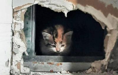 chat maison funéraire