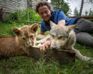 le loup et le lion Gilles de maistre