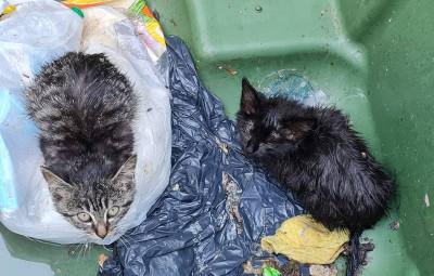 chatons poubelle recueillis